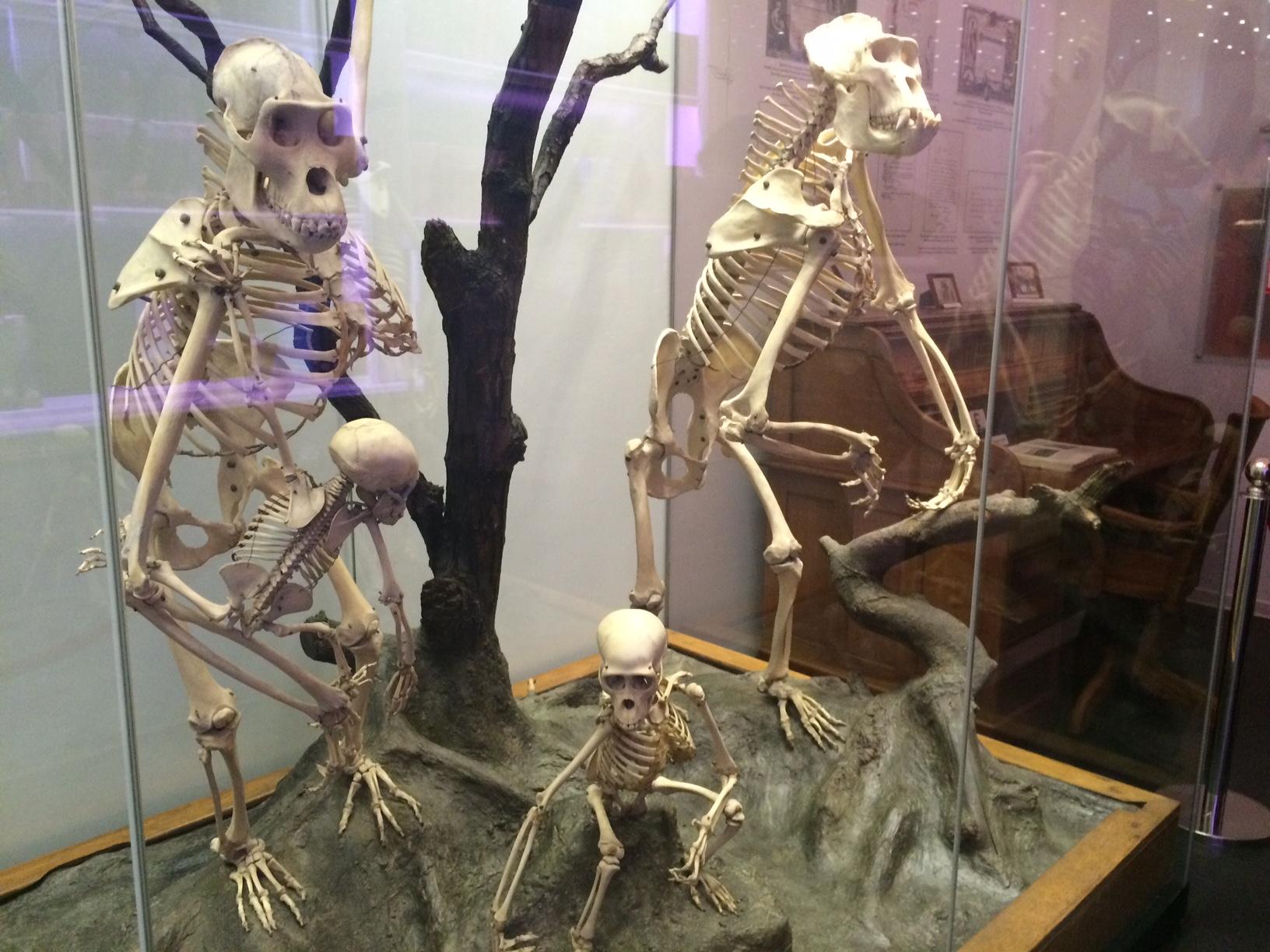 De vizitat în Bucureşti: Muzeul Naţional de Istorie Naturală Grigore Antipa
