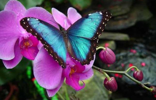 La Antipa culorile prind aripi!
